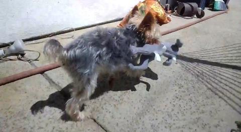 犬 googleglassで飼い主が撮影06
