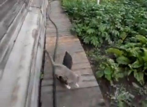 犬猫 犬が猫を背負って02