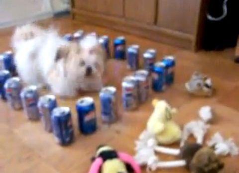 犬 ペプシの結界04