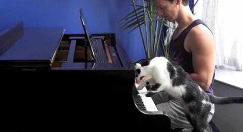 猫 ピアノを一緒に02