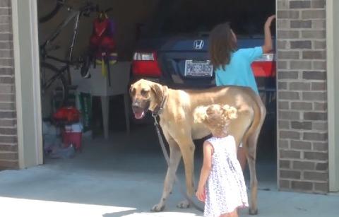犬 女の子と散歩00