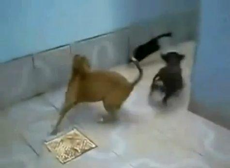 犬猫 sith 12