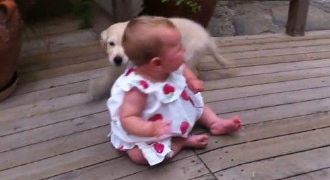 子犬 赤ちゃんにダッシュ>下から甘える02