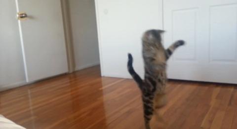 猫 直立歩き04