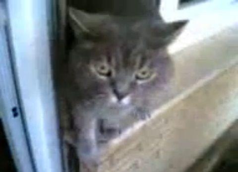 猫 帰りに握手を求める04