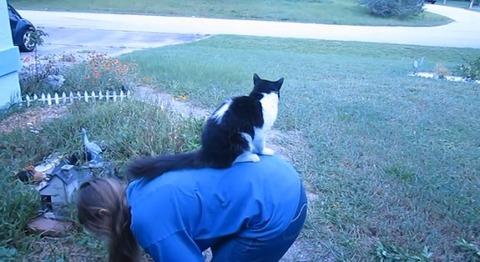猫 花壇で背中に乗られる05