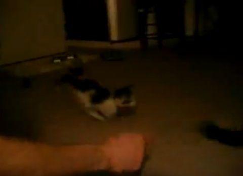 子猫 ベッドイン01