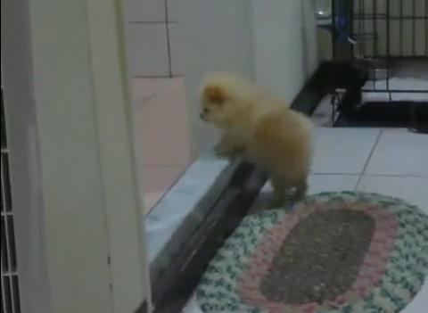 子犬 登れない01