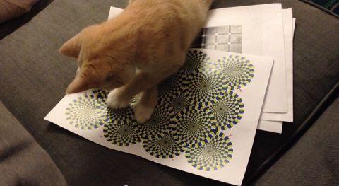 猫 錯視画像に反応03