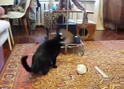 猫 vsオコジョ02