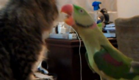 子猫 オウムがにゃ~02