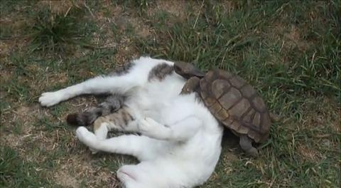 猫 亀にマッサージ00