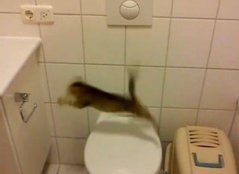 子猫 便座からジャンプ・・・03