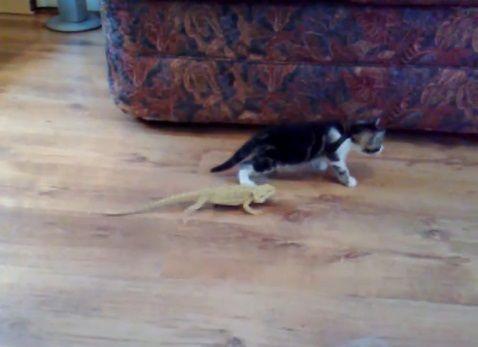 子猫 トカゲ05