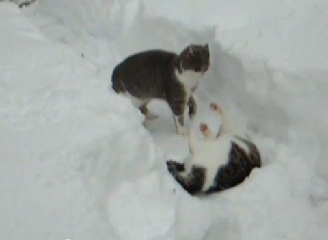 猫は喜び庭駆け回る01