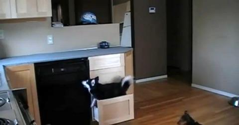 犬 キッチンの引き出しで03