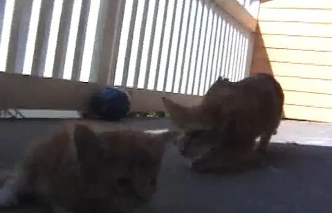 子猫 親猫が連れて行く02