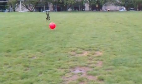 犬 大きなボールを追いかけて跳ね飛ばされる04