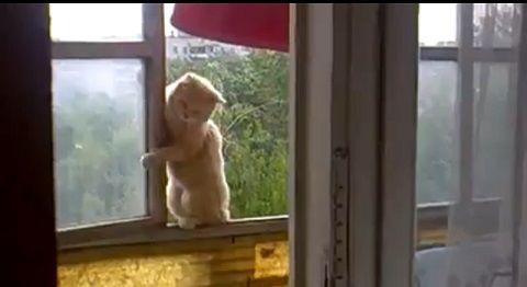 猫 6階の窓を伝って03