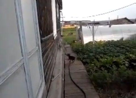 犬猫 犬が猫を背負って00