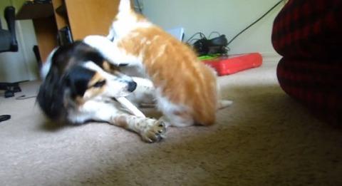 犬猫 いいかげん骨を食わせろ01