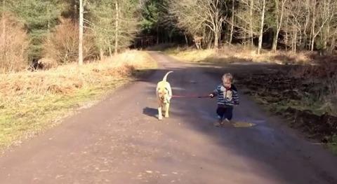 犬 子供と散歩で水溜り01