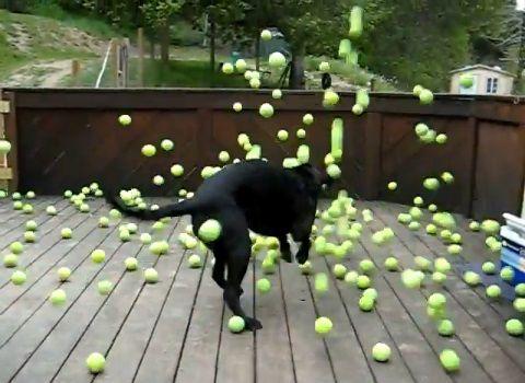 犬 ボールのサプライズプレゼント05