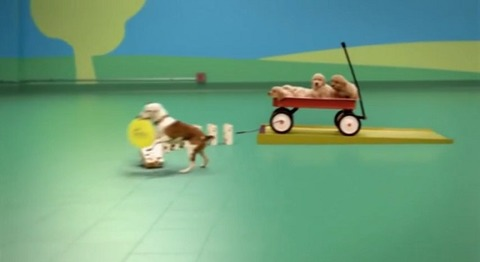 犬 ドッグフードのCM・ピタゴラ装置04