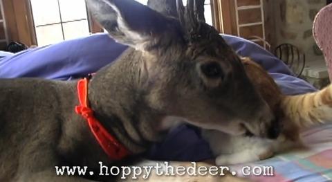 猫 鹿と仲良し01