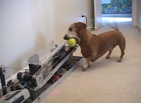 犬 ピッチングマシン?04