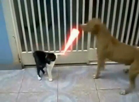犬猫 sith 04