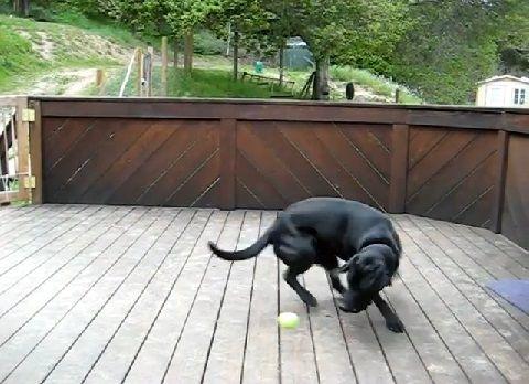 犬 ボールのサプライズプレゼント01