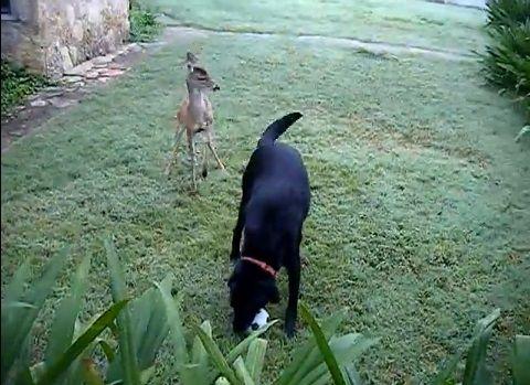 犬 鹿と遊ぶ00