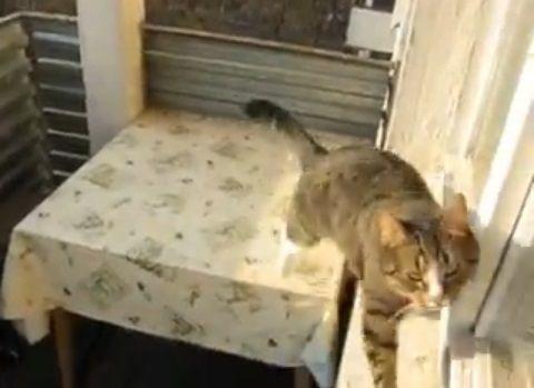 猫 三角飛び06