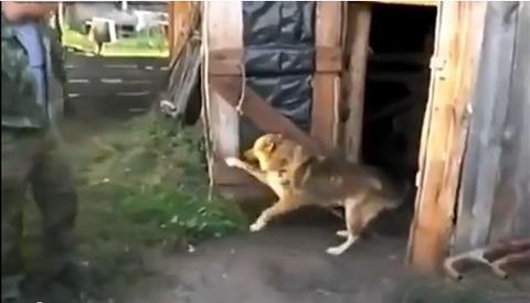 犬 小屋のドアを閉じる02