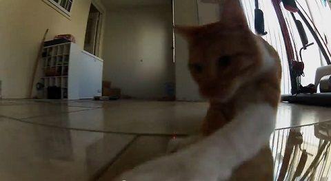 猫 ポインタ視点で追い掛け回される04