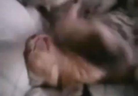 猫親子 寝相02