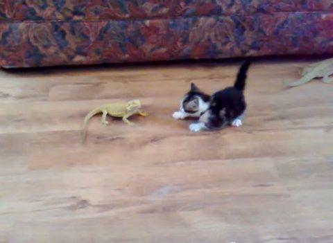 子猫 トカゲ14
