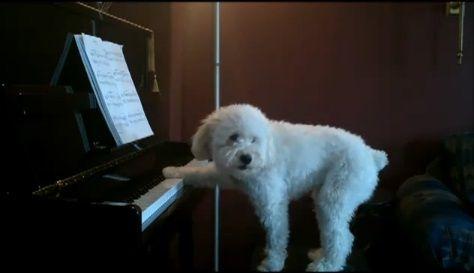 犬 piano 弾語り09