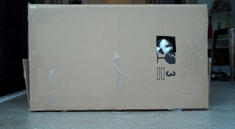 猫 箱を出たり入ったりな2匹01