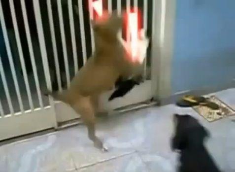犬猫 sith 07