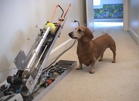 犬 ピッチングマシン?05