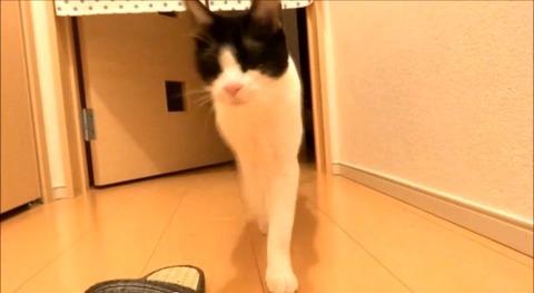 猫 2秒でお出迎え集04