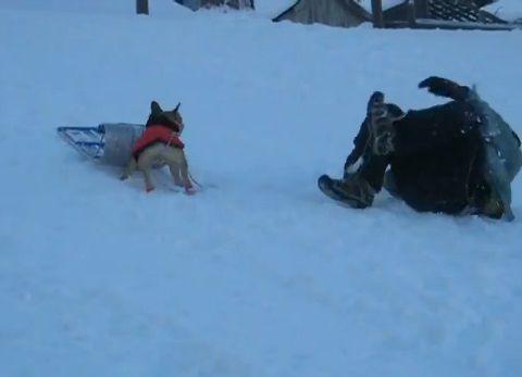 犬 そりを奪って滑る03