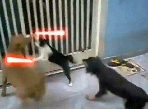 犬猫 sith 10