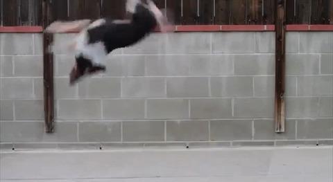 犬 超絶技の連続01