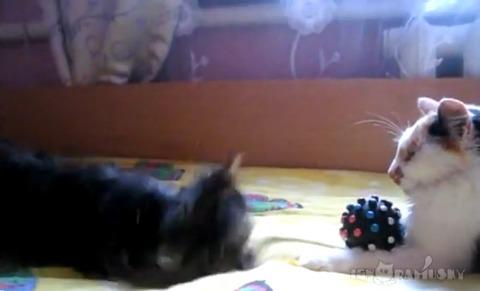 犬猫 おもちゃ返して01