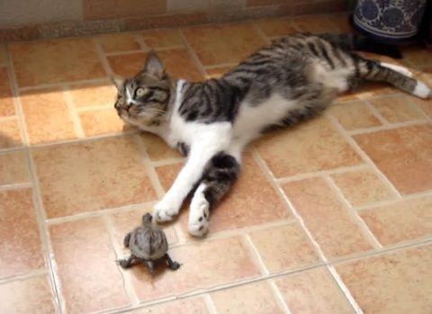 猫 小亀に好かれる02