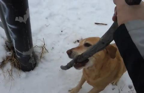 犬 枝が引っかかって06