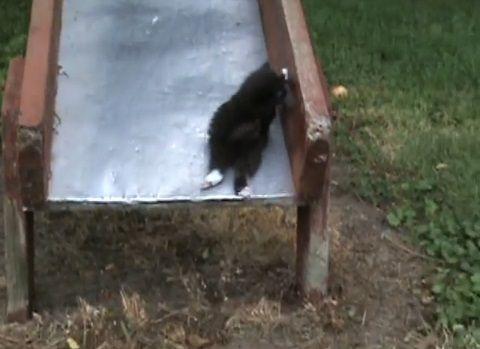 子猫 滑り台でhelp05